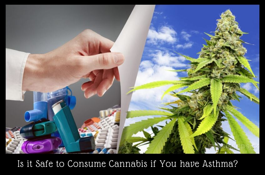 Consume Cannabis if You have Asthma